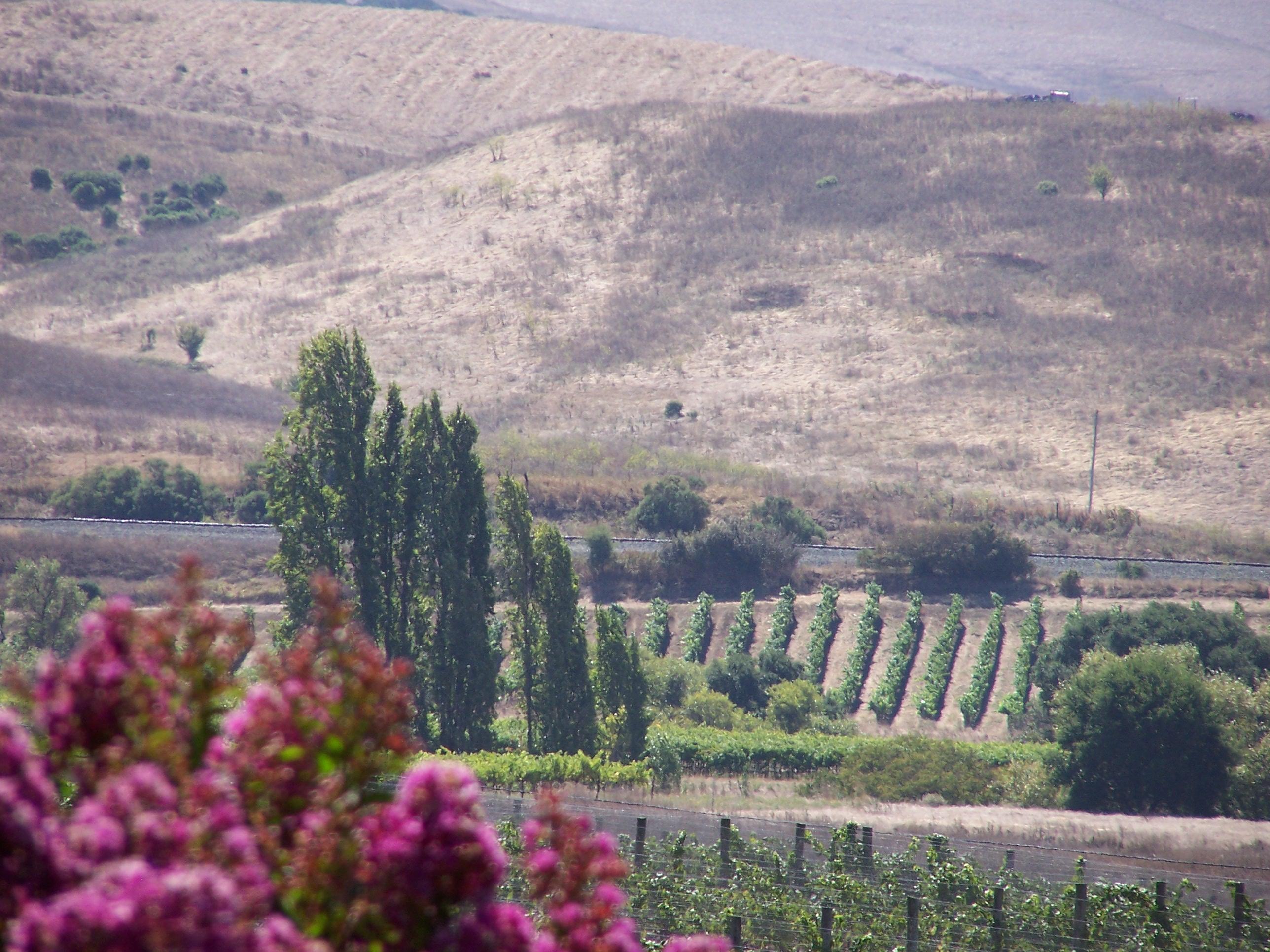 Photo California Wine Country