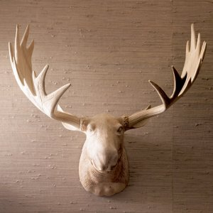 Moose Head And Moose Antlers What S Hot Now