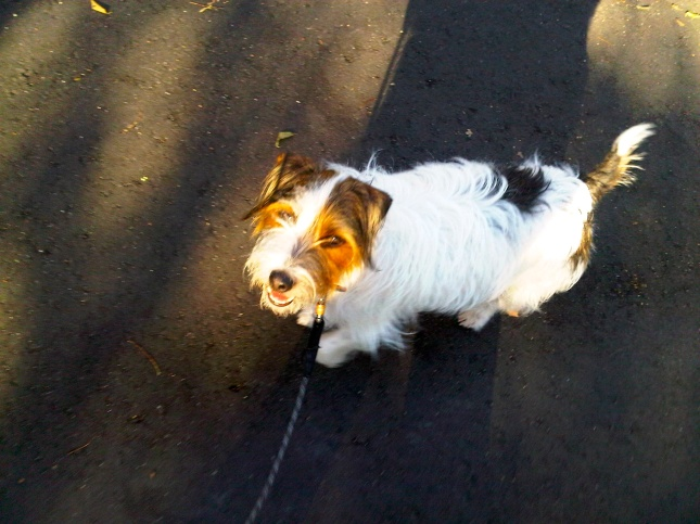 Charlie walking on the Greenway... Charleston, SC