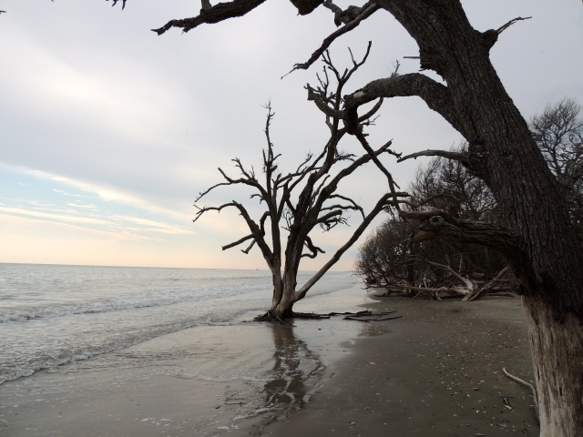 Beach at Botany Bay - Edisto, SC