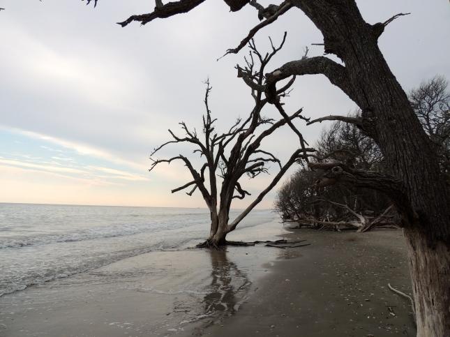 Beach at Botany Bay - Edisto, SC