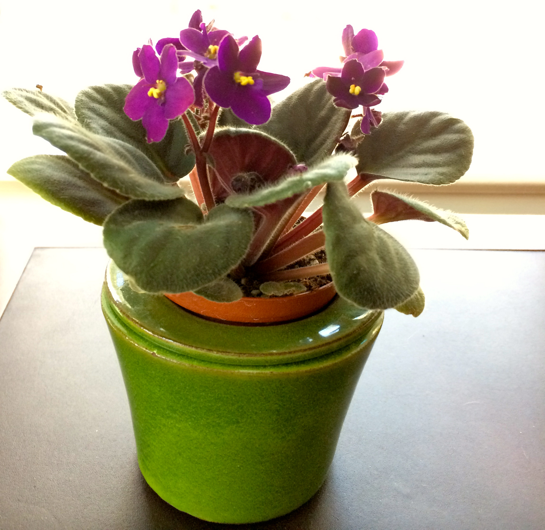 African Violet Growers Who Knows How To Use A Self Watering Pot