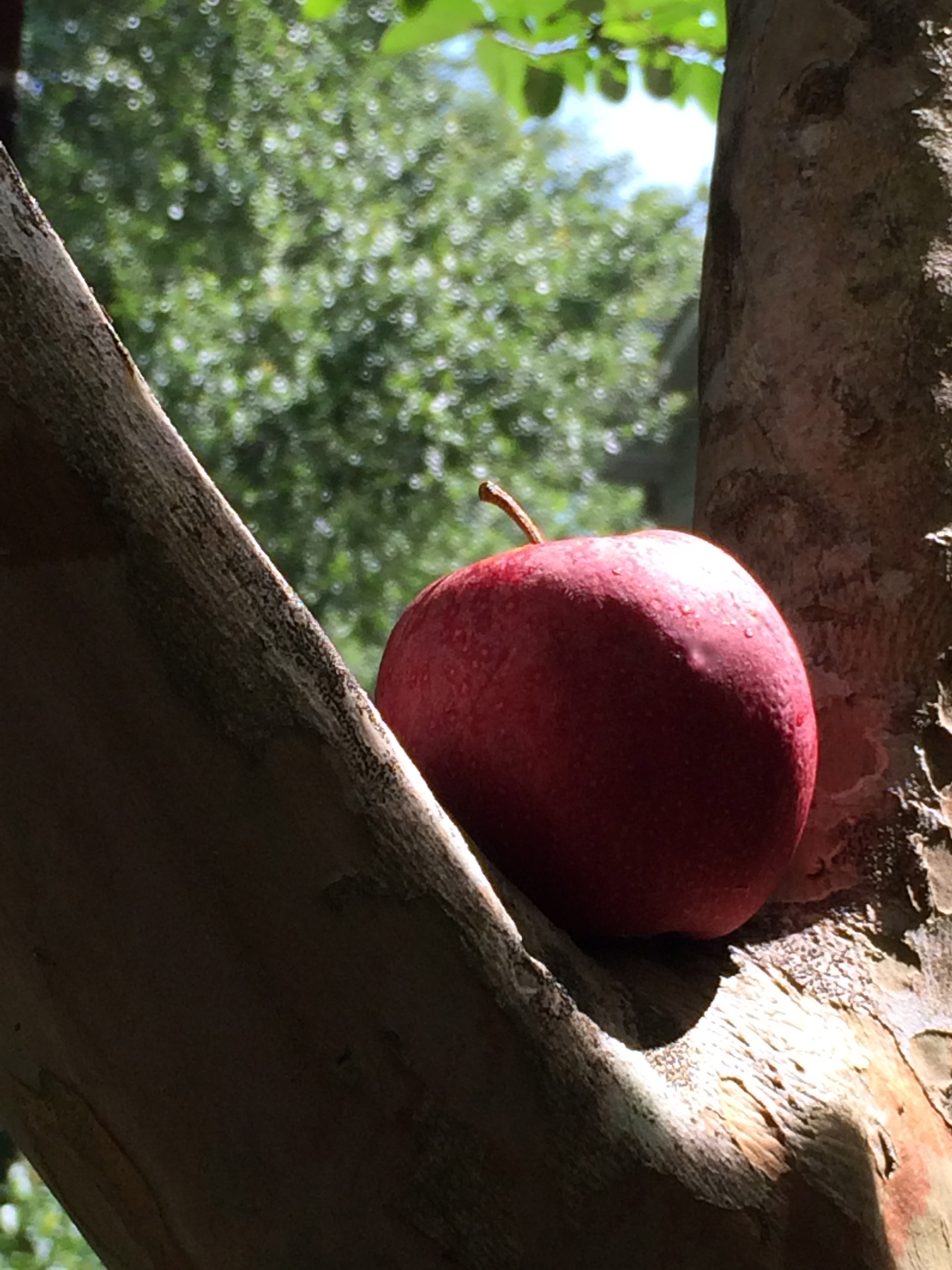apples dont fall to far from With its penultimate episode, fox's prison break revival tended to a bit of housekeeping (where is sofia), returned michael and linc to the states, sent whip on a surprising journey and in its final moments sprung a deadly trap.