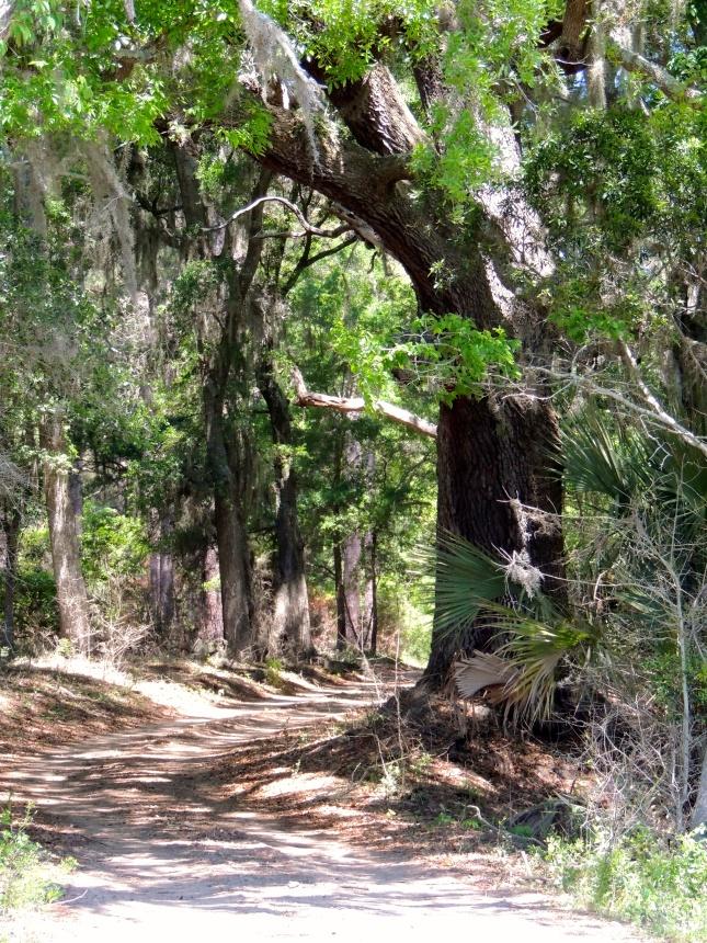 Botany Bay Trail - Edisto, SC
