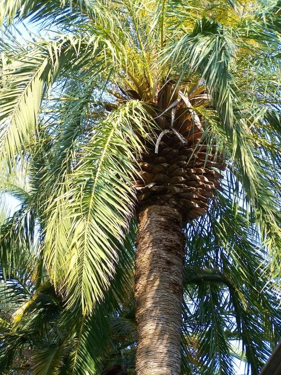 Palm Sunday - Charleston, SC