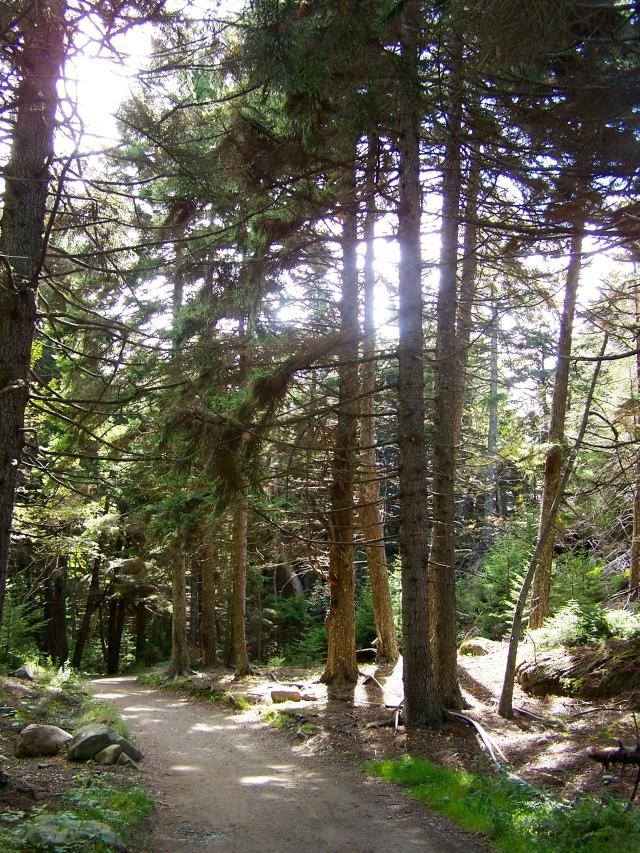 Monhegan Trail