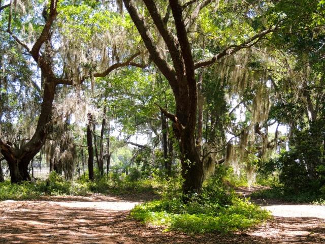 Botany Bay | Edisto, SC
