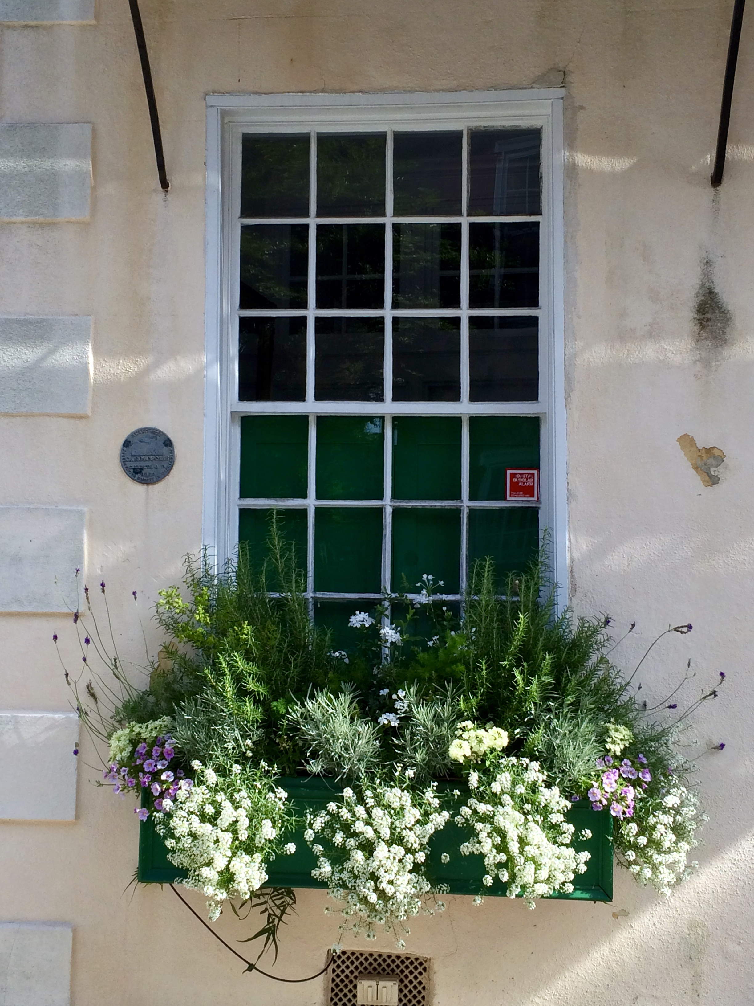 Charleston Window Boxes And Ideas To Fill Them