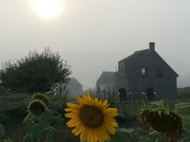 Monhegan Fog | barbara stroud