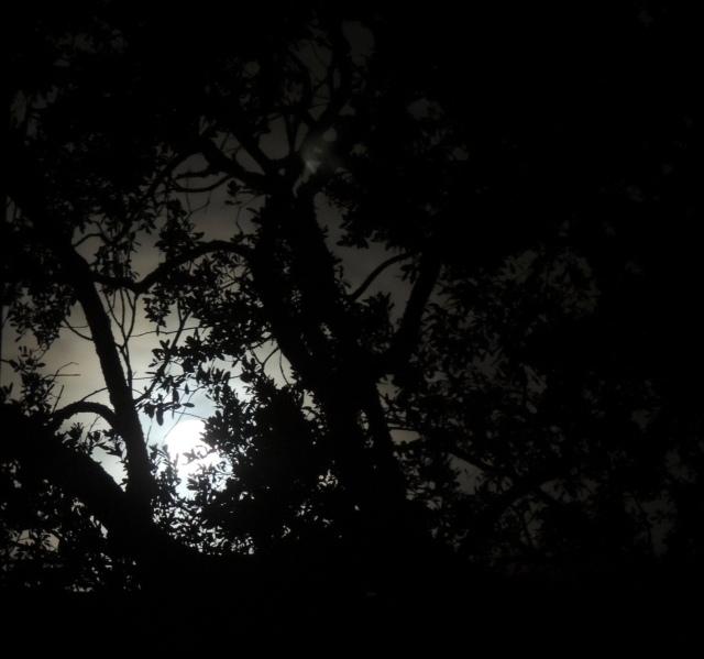 Wolf Moon 01.12.17