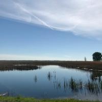 St. John's Marsh - Serenity!