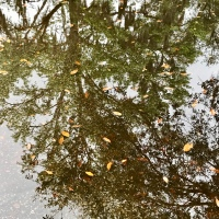 Reflections of a Live Oak!