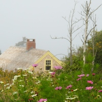 Photo from the archives: Monhegan, Maine - Flowers & Fog!