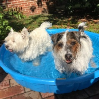 Summertime Friends Trying To Keep Cool!