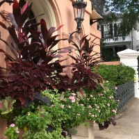 October Window Boxes - Charleston, SC!
