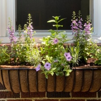 Happy Dance: The Window Box is Back!